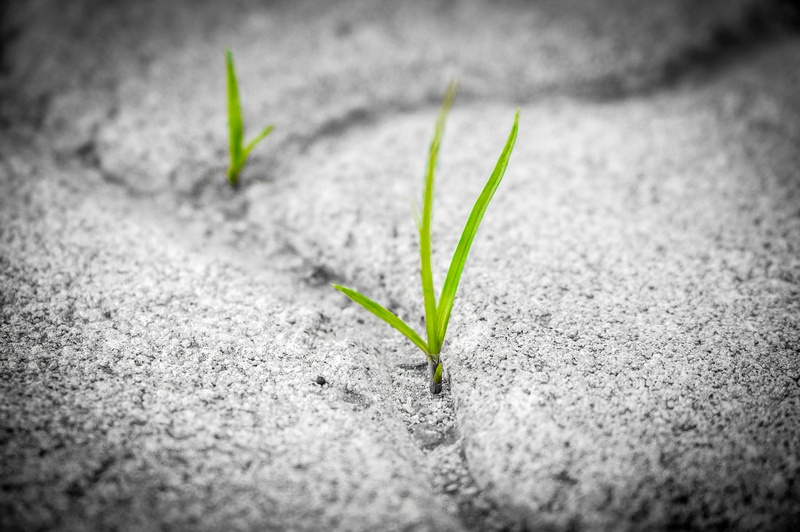 Perseverance in the face of change